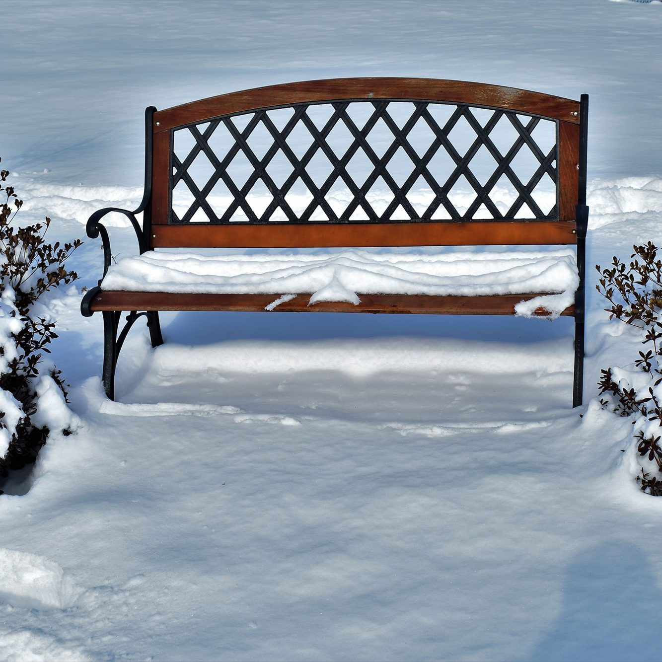 Backyard Bench Under Snow