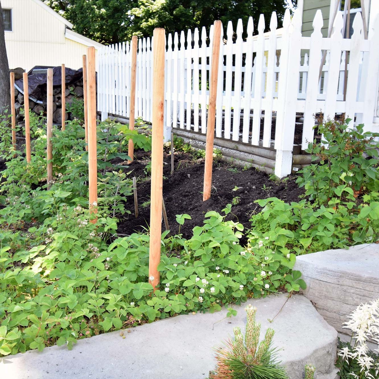 Berry Patch and Shade Garden