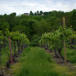 Nearby Scenic Vineyards